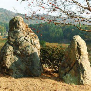 蛇紋岩とサルスベリ古木(造成途上)
