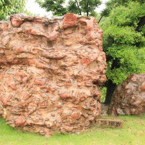 珊瑚石 重量15トン