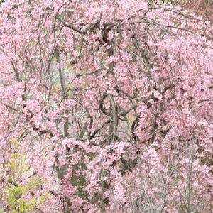 「メモ」上段の植物群