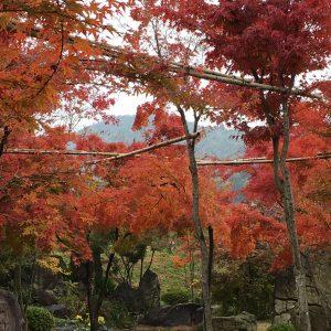 もみじ園紅葉
