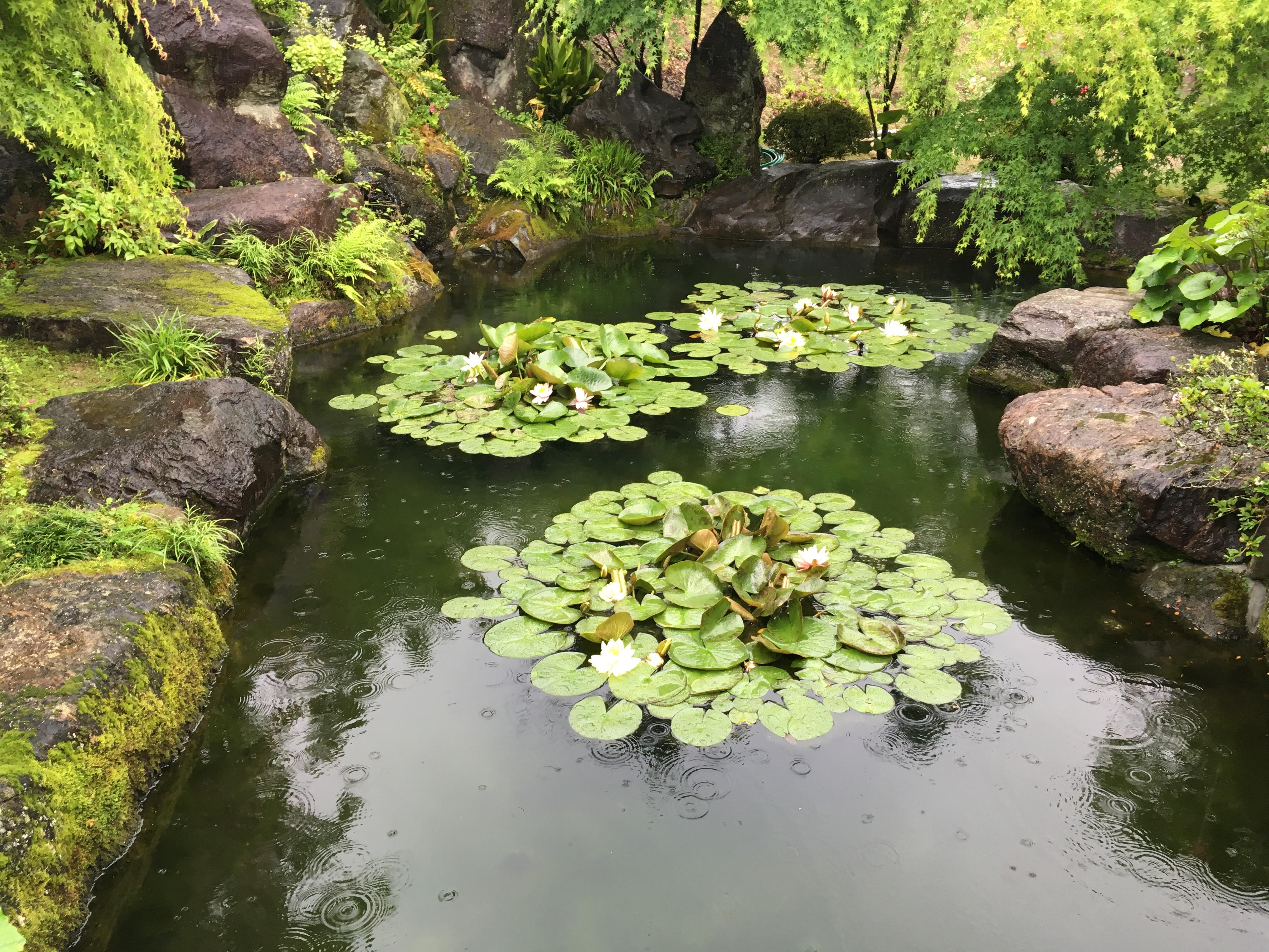 もみじ園内蓮池